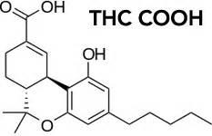 Thc Cooh Detox best detox pills for these pills work my marijuana