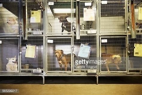 puppy shelters nyc petition 183 andrew cuomo dogs and cats need homes gov cuomo 183 change org