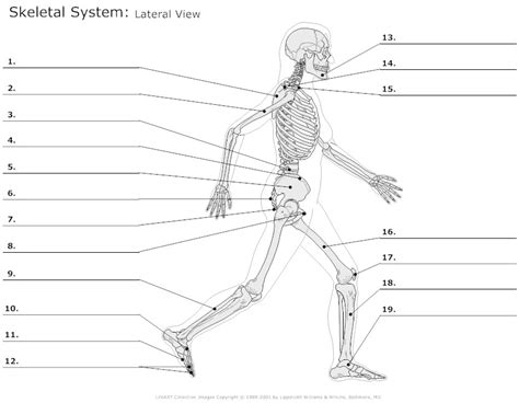 diagram of the skeletal system worksheet 14 best images of labeling worksheet high school