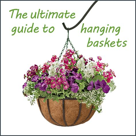 Homemade Flower Pots Ideas by The Ultimate Guide To Hanging Baskets
