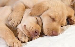 best sleeping wallpaper hd 0007 wallpaper wallpaperlepi