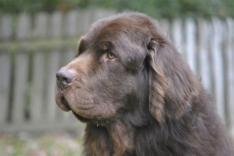 low albumin in dogs leroy and ibd warning this post exceeds the maximum word count mybrownnewfies