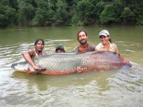 Arapaima Conservation?It?s Happening at the Local Level in Guyana