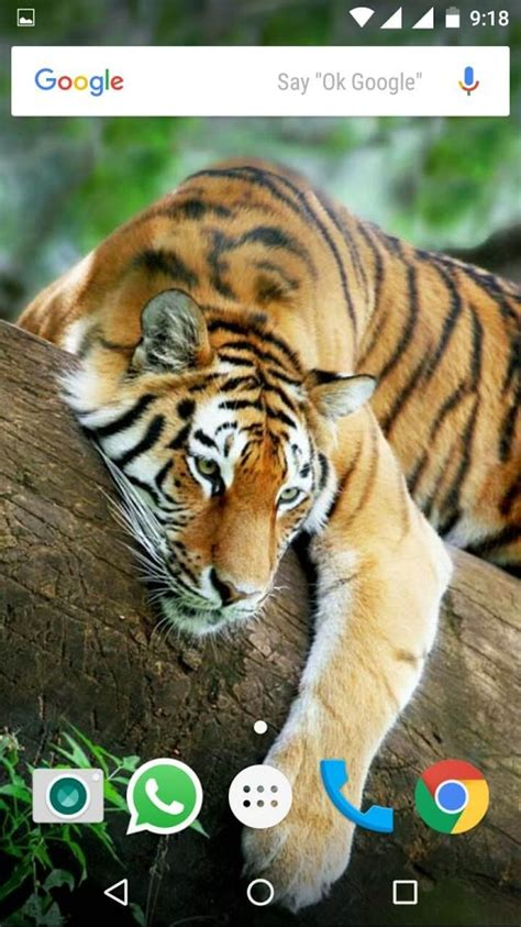 hd wallpaper for android tiger tiger wallpapers hd android apps on google play