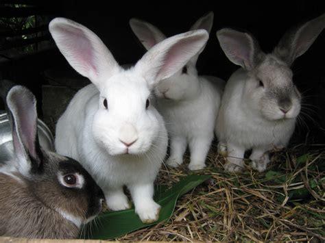 conejera fotos file conejos en una conejera jpg wikimedia commons