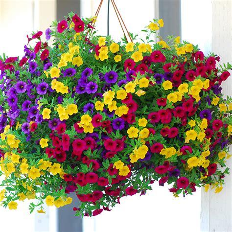 Benih Seeds Bibit Flower Bunga Single Mixed China Aster Wildf mudah bunga taman beli murah mudah bunga taman lots from