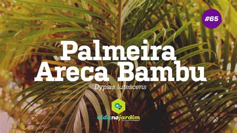 15 Benih Bunga Palmeira Areca Bambu palmeira areca bambu 65 dicas r 225 pidas