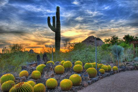 Desert Botanical Garden Free Day Let S Discuss Maricopa County Sheriff Joe Arpaio Aka Quot America S Toughest Sheriff And Az S