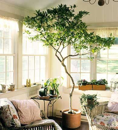 tree in living room best 25 indoor trees ideas on best indoor