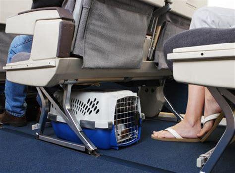 trasportino aereo cabina ambulatorio veterinario orsamaggiore album dei pazienti
