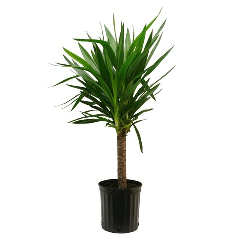 maintenance of indoor plants how nice is it to have a