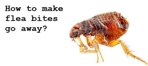 how to make bed bug bites go away 99 best images about my blog posts on pinterest windows