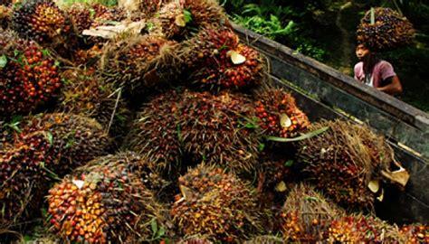 Minyak Kelapa Sawit Hari Ini ini harga baru minyak sawit mentah global 2016 bisnis