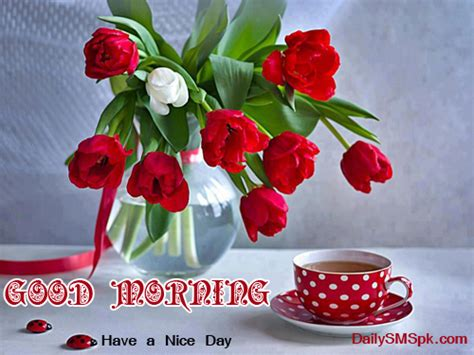 good morning tea cup and flowers wallpapers sms wishes