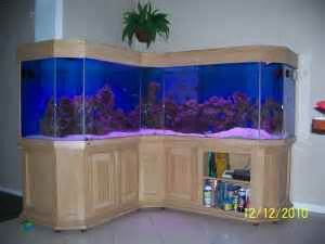Giant Aquariums: L Shaped 300 Gal.