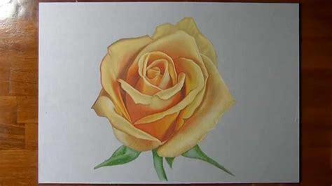 marcello fiore disegno realistico in timelapse rosa gialla