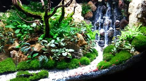 aquascape inspiration aquascape the beauty of the inside water garden inspirationseek com