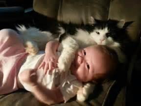 Retrouvez des images avec des chats et de b 233 b 233 s trop mignons
