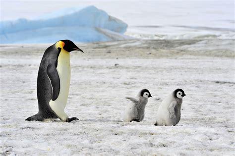 understanding a photograph penguin explore the ross sea the last pristine marine ecosystem