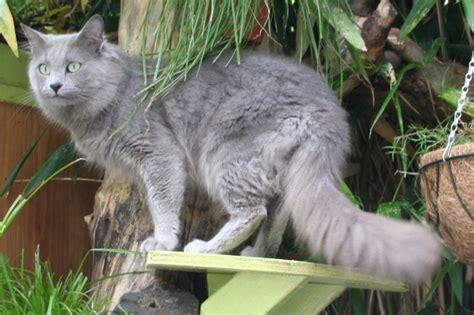 ABCs of Animal World: The World?s Rarest Breeds of Cat