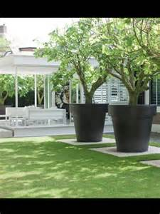 Large Planter Pots For Trees by Gardens And Landscaping Garden Landscaping Ideas