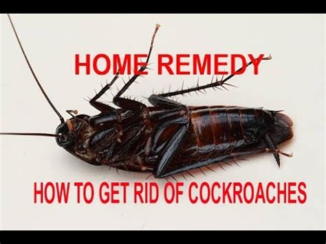 how to get rid of roaches in the bathroom how to get rid of cockroaches permanently in a week home