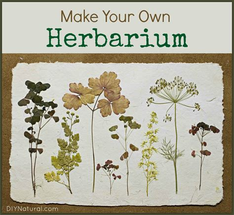 Make Plant - make your own herbarium identification book