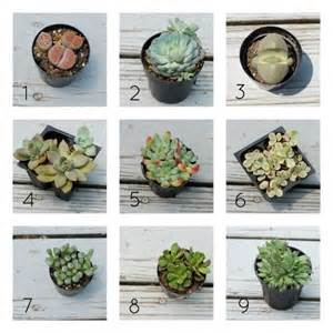 25 best ideas about types of succulents on pinterest cactus types names of succulents and