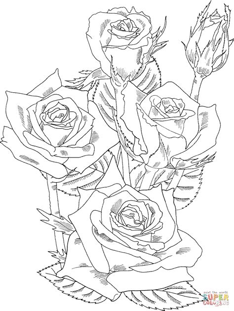 hard rose coloring pages grandiflora prominent bush roses coloring page free