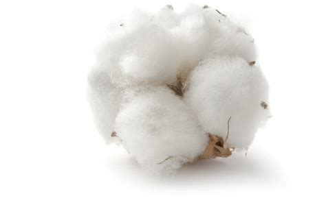 clean white cotton crisp white cotton glade fragrances