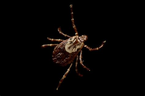 Ng 21 Jaket National Geograpic Photographer a tick bite could make you allergic to meat and it s spreading