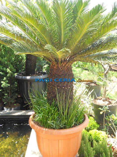 tanaman hias tukang taman jakarta jasa pembuatan taman