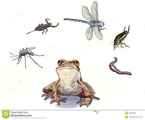rana alimentazione los anfibios