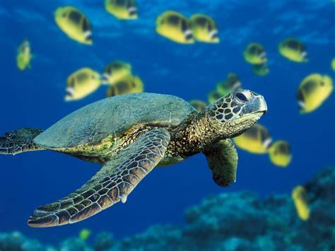 google images turtle sea turtle
