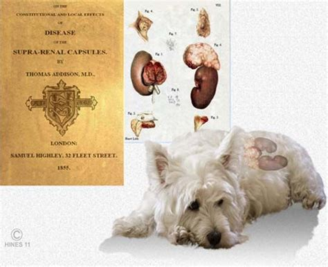 puppies disease pin by lyn on reference veterinary canine s diseas