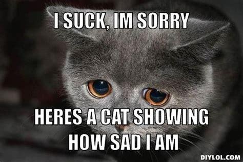 Im Sorry Memes - sad cat memes image memes at relatably com