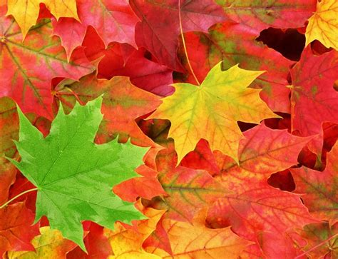 the other side of fall leaves the fisheries blog