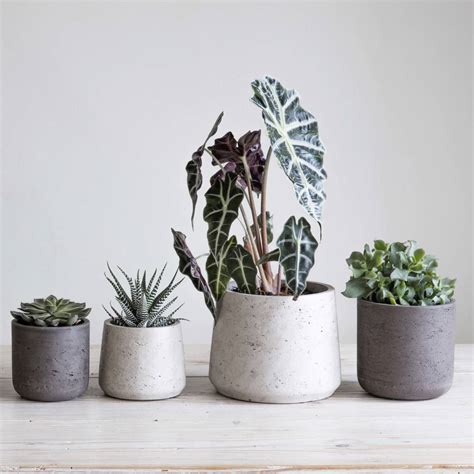 pots for plants cement plant pot set of two by idyll home
