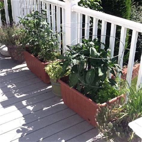 Back Deck Vegetable Garden Backyard Projects Pinterest Deck Vegetable Garden