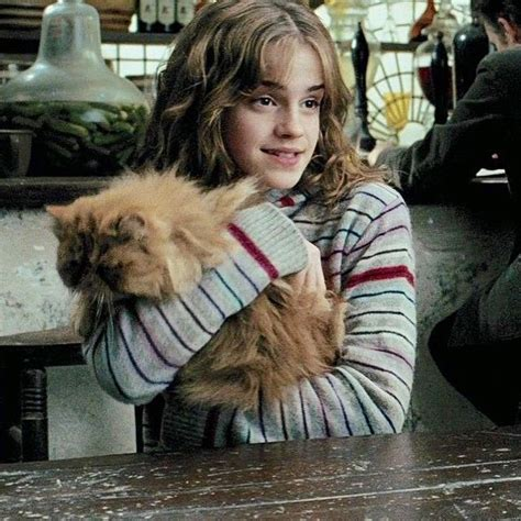 Chat D Hermione Granger by Crookshanks Harry Potter Cats Other And