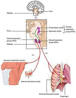 respiratory center wikipedia