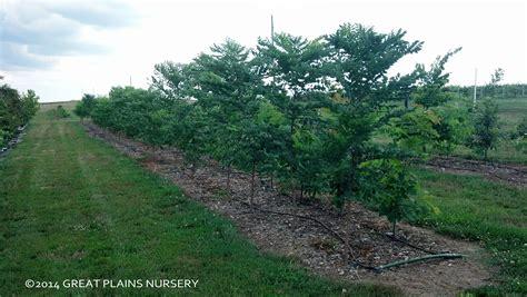 images of christmas tree farms in nebraska christmas
