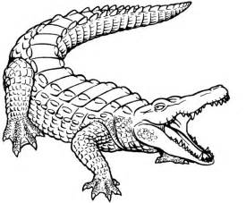 crocodile pictures to print free printable crocodile coloring pages for
