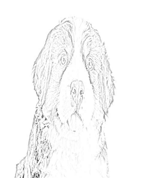 mountain dog coloring page bernese mountain dog coloring pages berner love