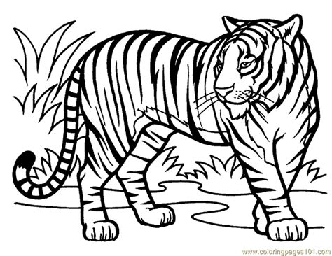 White Tiger Coloring Pages white tiger coloring pages coloring home