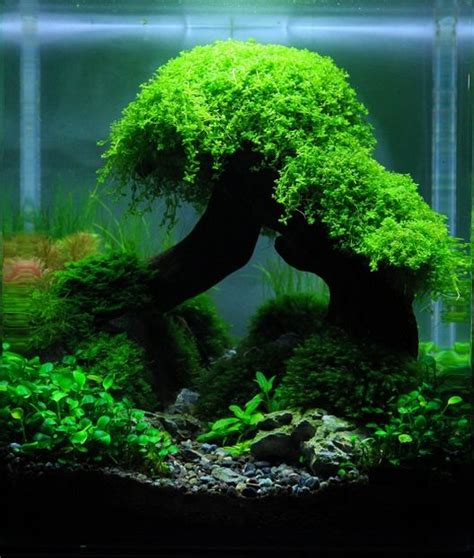 how to aquascape a freshwater aquarium 17 best images about aquarium fish tank aquascape