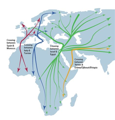 america bird migration map a gif map of the migration routes of 118 species of birds