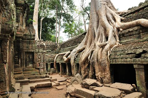 ta prohm temple www pixshark images galleries with