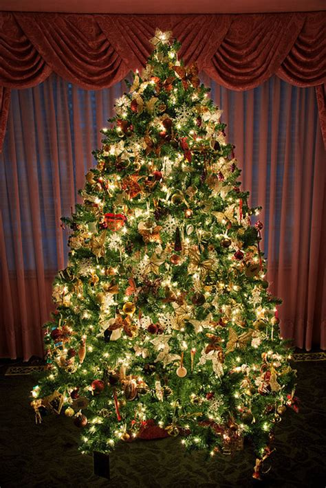 amazing christmas tree pictures photos and images for