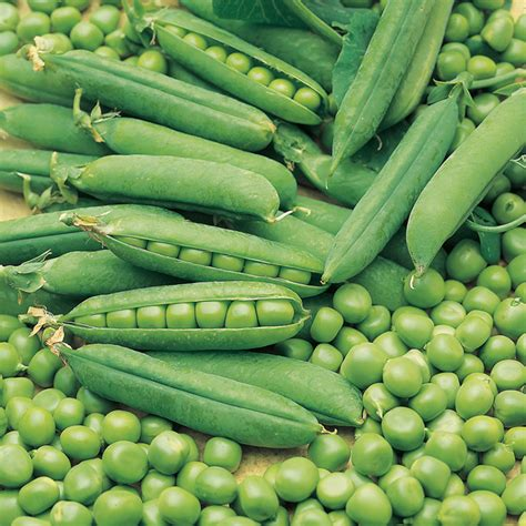 Pea Delivery Pea Early Onward Seeds Dobies
